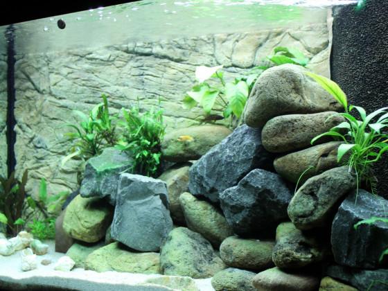 Tanganjikasee Aquarium