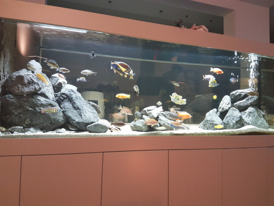 Malawisee Aquarium