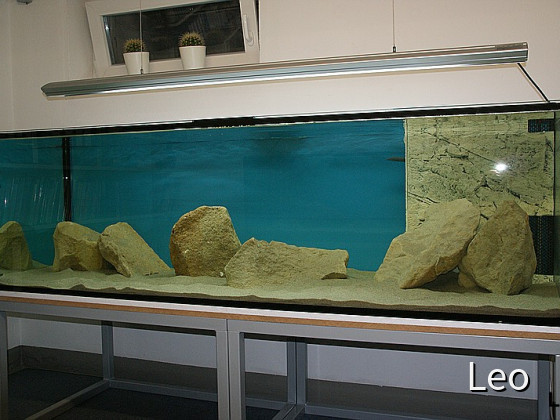 Aquarium im Keller