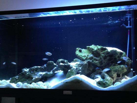 Tanganjika Aquarium
