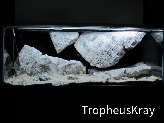 Tanganjikaaquarium