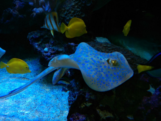 Meerwasseraquaristik