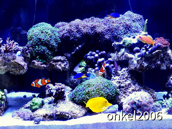 Red Sea Reefer 250