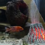 Mein Aquarium