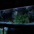 Aquarium 240 x 70 x70